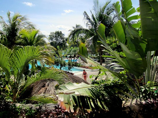 Hotel Riu Playacar: Pool area and resort... lush greenery!