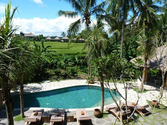 Alaya Resort Ubud: Pool and rice paddy