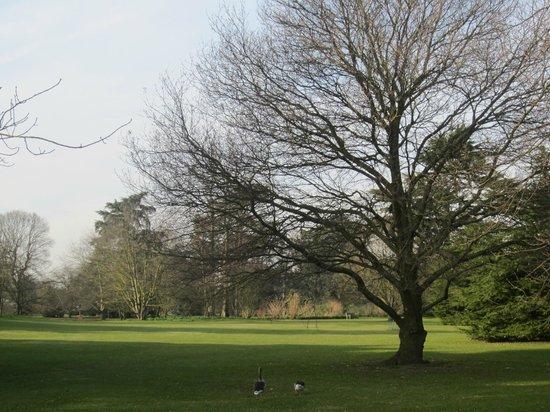 Royal Botanic Gardens, Kew: Kew Garden in winter