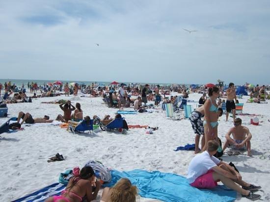 crowded during spring break picture of siesta beach siesta key rh tripadvisor co nz