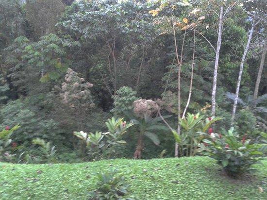 Hotel Lomas Del Volcan: View