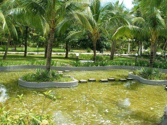 le belhamy resort & spa: Лягушачье царство