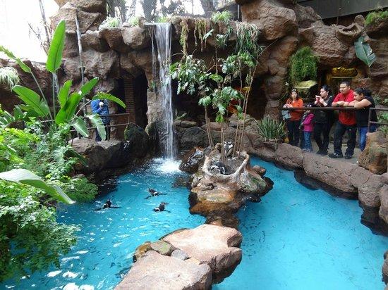 Lontra Picture Of Dallas World Aquarium Dallas