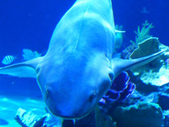 Shark Tank Picture Of Point Defiance Zoo Aquarium