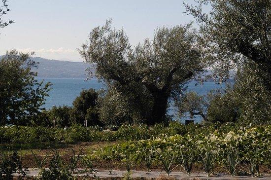 L'Orto delle Fate : l'orto biologico sul lago