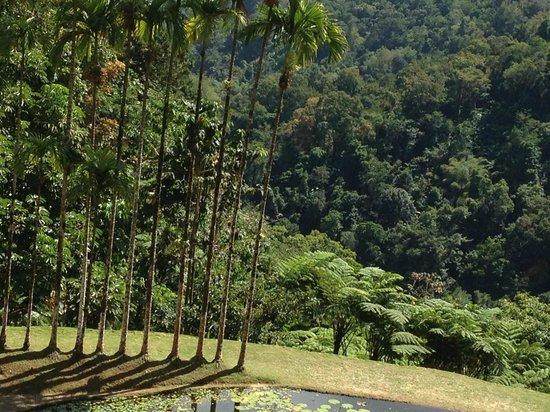 Petite foug re photo de jardin de balata fort de for Location jardin 78