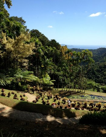 Racine du ficus trangleur photo de jardin de balata for Location jardin 78