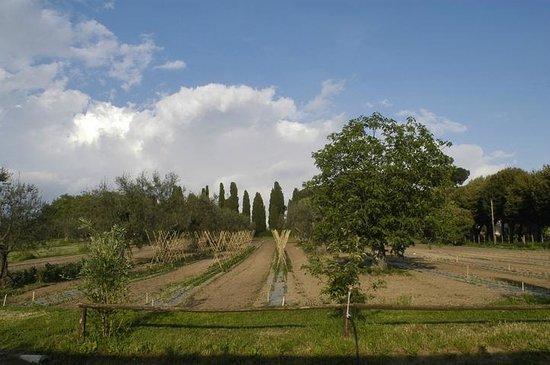 L'Orto delle Fate: la vista dell'orto biologico