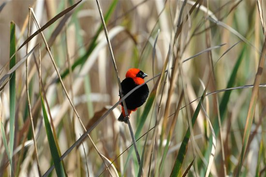 Yotclub B&B: Red Bishop