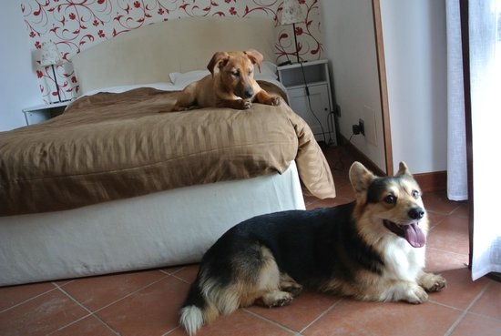 Bed and Breakfast Villa Beatrice照片