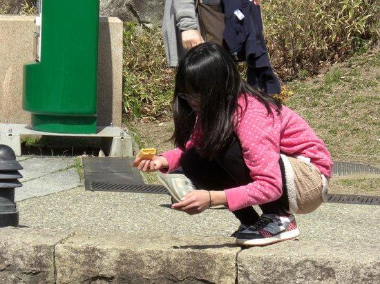 Oasis Park: 鯉のえさやりに夢中(100円)