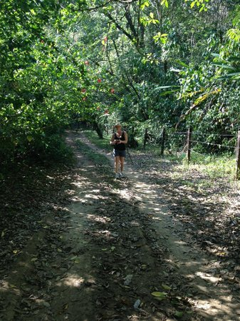 Lookout Inn Lodge: Shady Lane Hike