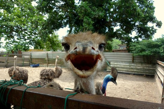 Desaru Ostrich Farm: happy face :)