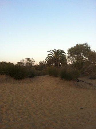 Vista Dorada Apartments: maspalomas dunes