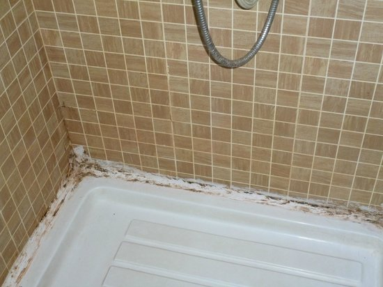 Treebo Edge : Dirty and Molded Bathrooms