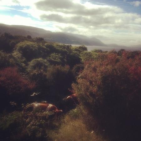 칠로에 섬 사진