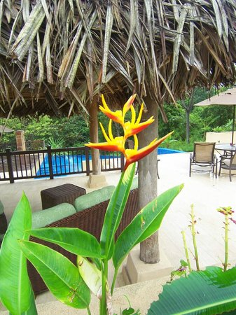 Red Frog Beach Island Resort & Spa: Beautiful flowers and plants on the island