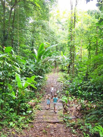 Red Frog Beach Island Resort & Spa: Adventure walk on the jungle path