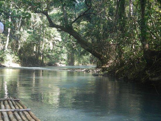 Martha Brae River: A view down the river