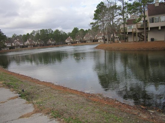 Waterwood Townhouses: Lake surrounding the houses