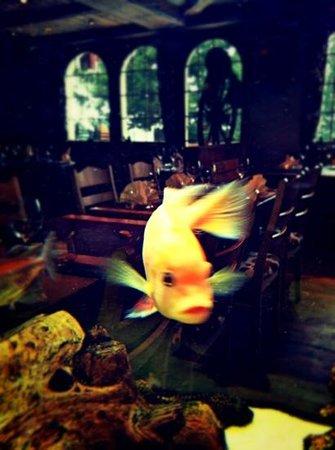 Restaurant Chuestall : fishtank