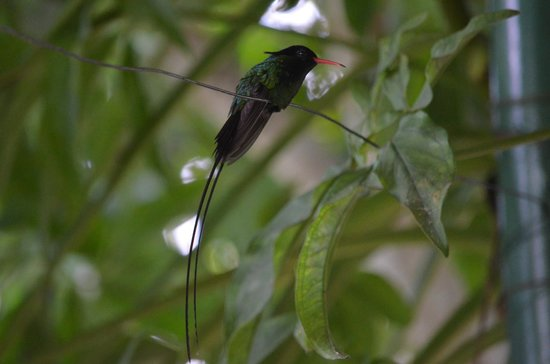 Rocklands Bird Sanctuary: Hummingbird