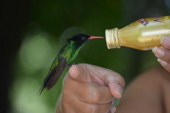 Rocklands Bird Sanctuary: Hand feeding
