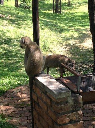 Lokuthula Lodges: Monkey & Wart Hog