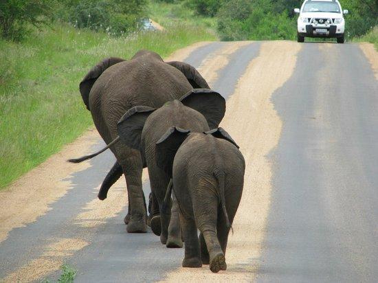 Kruger National Park, South Africa: elephants