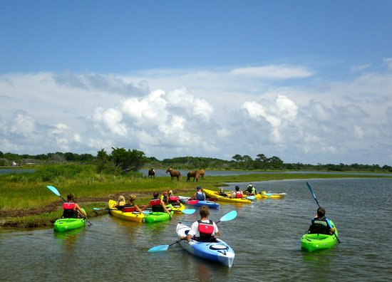 SuperFun Eco Tours : Assateague's Wild Horses