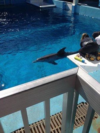 Clearwater Marine Aquarium: Hope
