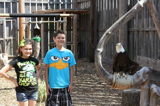 Eagle Valley Raptor Center : Kid's with a resident Bald Eagle, what a beautiful creature!