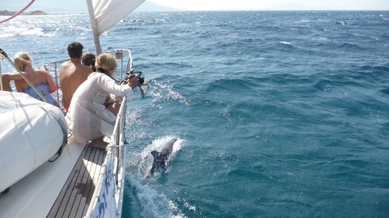 Naxos by, Hellas: DOLPHINS  ON OUR SAILING TOUR