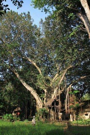 Sigiriya Village Hotel: Garden