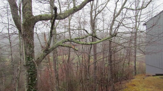 Unicoi State Park & Lodge: Scene from the rear of Building A
