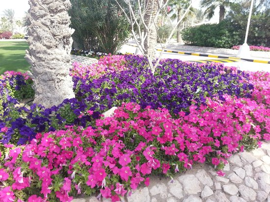 Doha Golf Club : Flower bed