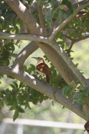 Eco-hostal Mamita Helmita : garden