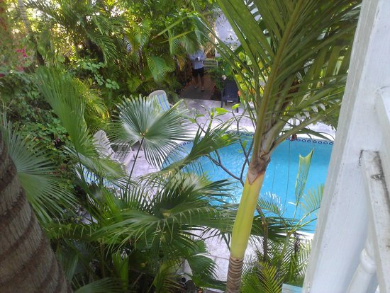 Coco Plum Inn Bed and Breakfast: Pool from our room