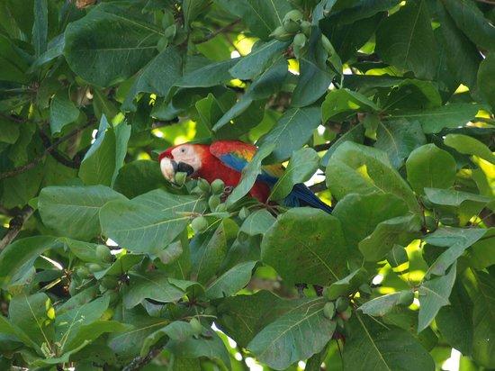 Cabinas Tropicales: Ara Papageien im Garten