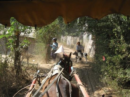 Innwa: Horse transport