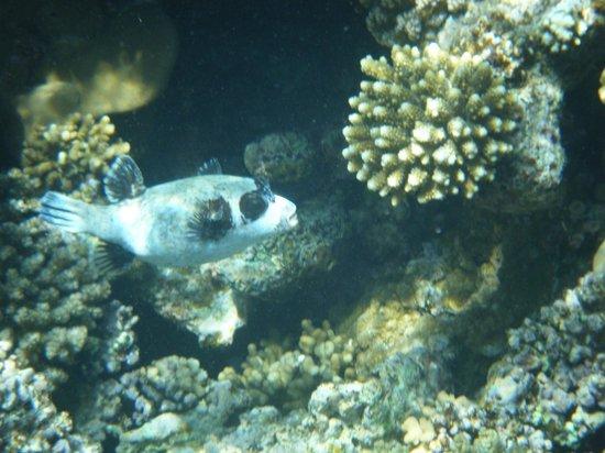 โรงแรมมีเลีย สินัย: Reef fish