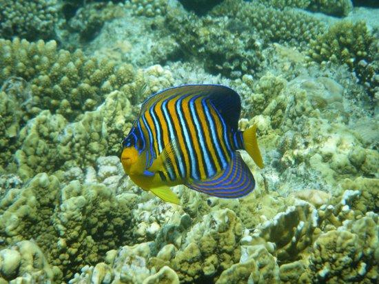 Melia Sinai: Reef fish