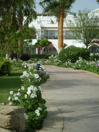 Melia Sinai: Hotel grounds