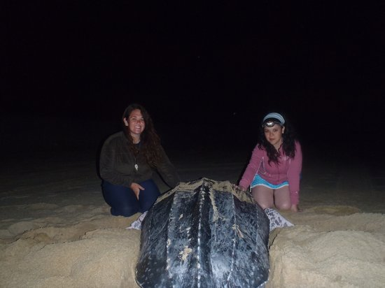 Tortugueros Las Playitas : Volunteers with nesting Leatherback