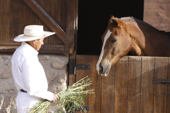 Wayra : Peruvian Paso Horses