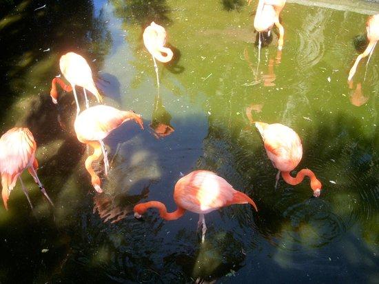 أيبروستار كوزوميل أول إنكلوسف: Flamingos!
