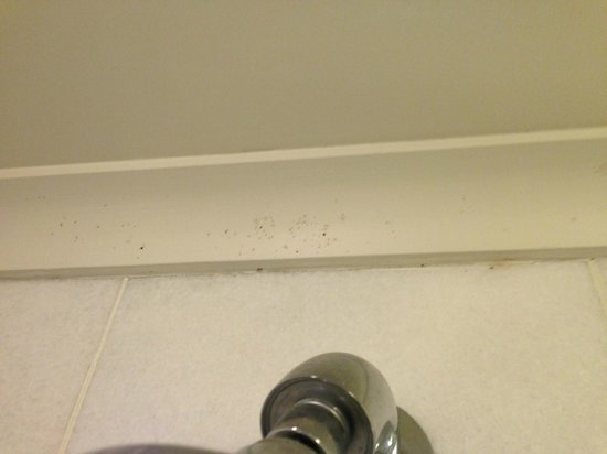 Lilianfels Blue Mountains Resort & Spa: mould in the bathroom