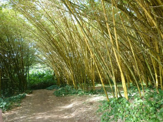 Bamboo room at the Allerton Gardens - Picture of National Tropical ...