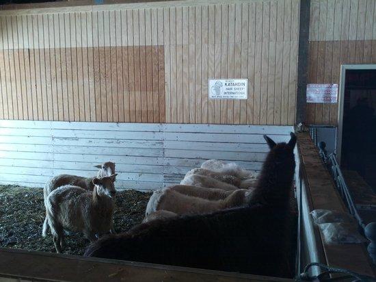 The Speckled Hen Inn Bed & Breakfast: Farm