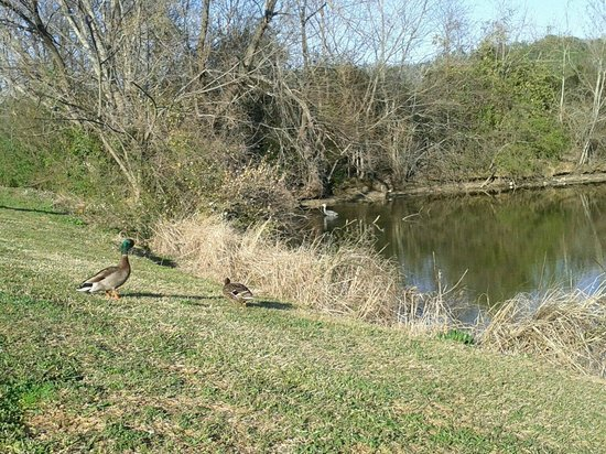 Motel 6 Gadsden: Ducks and cranes are in the water all day